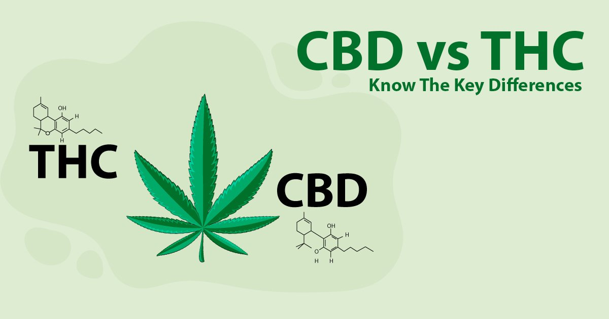 CBD vs THC: Know the key differences